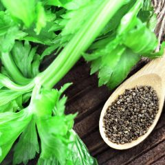 Celery Seed Essential Oil