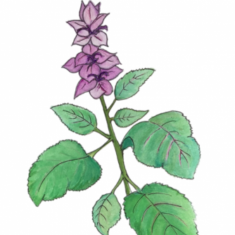 Clary Sage | Range Products