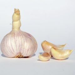 Garlic Essential Oil – Out of Stock