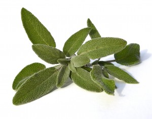 Sage Essential Oil Dalmation – Out of Stock