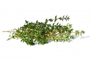 Thyme, Red Essential Oil – Out of Stock