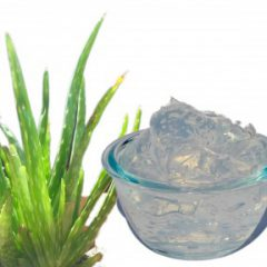 Aloe Vera Gel – Out of Stock