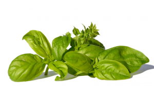 Basil Essential Oil