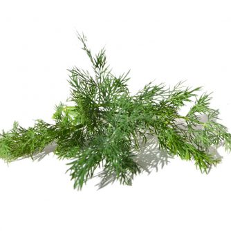 Dill Leaves | Range Products