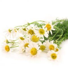 Chamomile German Blue Oil 3% Dilution in Jojoba Oil